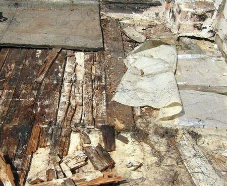 Schäden an einem Flachdach mit holzerstörenden Pilzen
